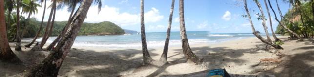 plage de cocotiers