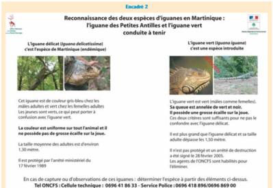 Reconnaitre et différencier les iguanes de Martinique - Cliquez pour agrandir