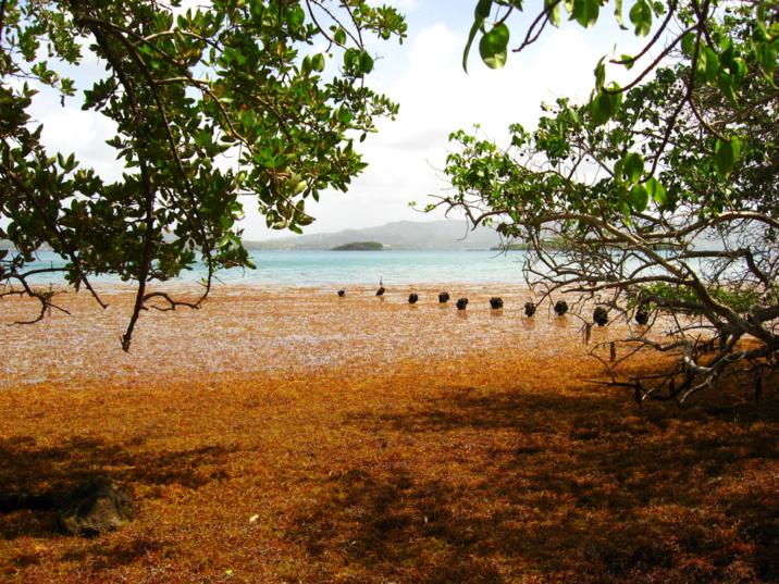 Mouillage site des iguanes lors d'un très gros échouage