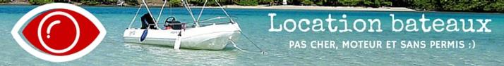 Tortue de Martinique à voir dans la Baie du Robert