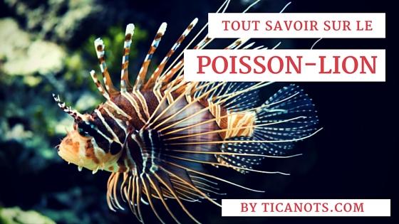 Poisson-lion Martinique