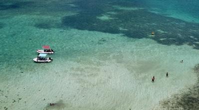 Ticanots ancrés sur un fond blanc et baignade