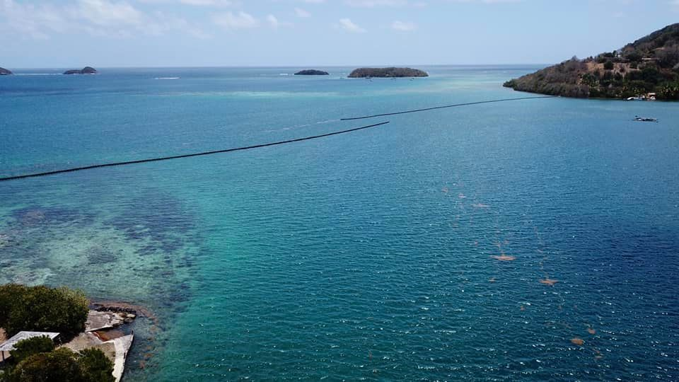 Sargasses Martinique : peut-on faire du bateau dans la baie du Robert ?