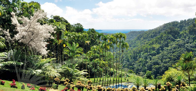 Visite Martinique Jardin de Balata
