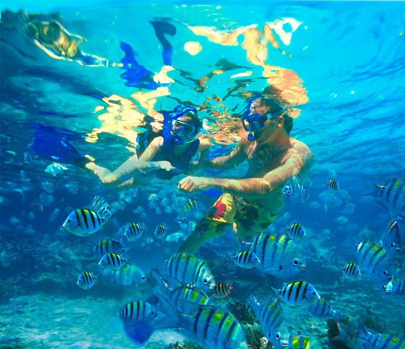 Palme masque tuba Martinique - PMT - snorkeling