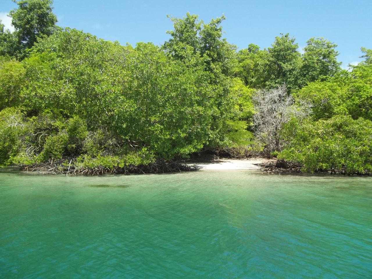 Petite plage entre les arbres de mangrove bordant l'îlet Chancel
