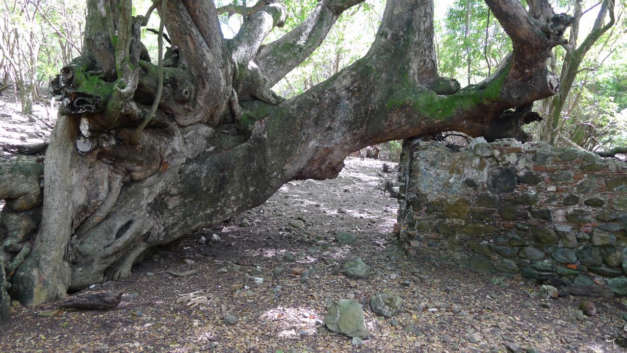 Ruines archéologiques 2, îlet Chancel